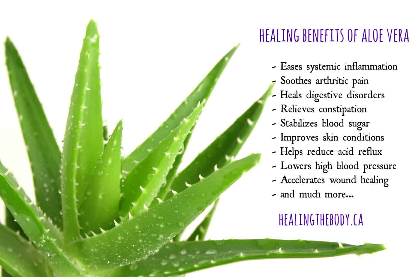 Does Drinking Aloe Vera Have Health Benefits