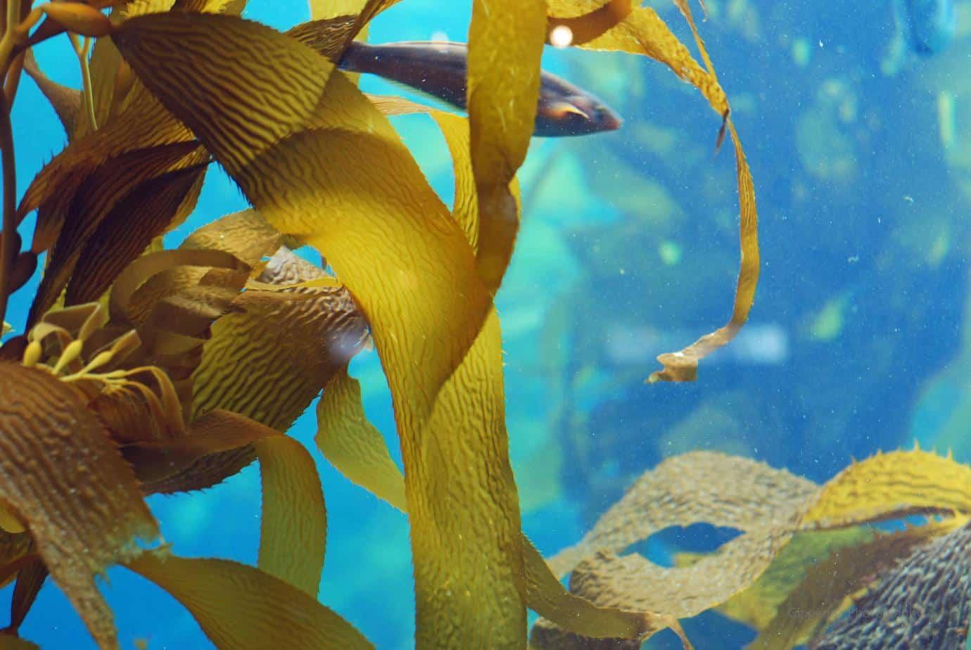 Healing Benefits of Sea Vegetables